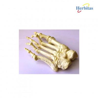 3 Pieds plastique physiologique, plat et creux.